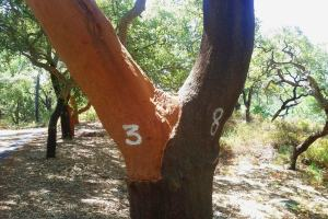 algarve walking tours cork tree monchique